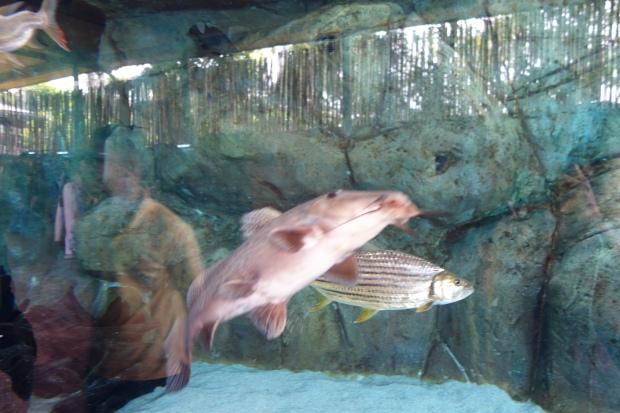 More sea creatures...