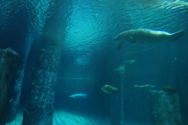 Another captivating highlight: Dugongs!